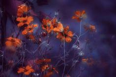 Red in blue, автор — Delphine Devos на 500px.com