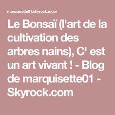 Le Bonsaï (l'art de la cultivation des arbres nains), C' est un art vivant ! - Blog de marquisette01 - Skyrock.com