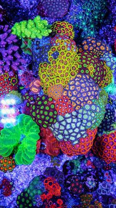 Saltwater Aquarium - Find incredible deals on Saltwater Aquarium and Saltwater Aquarium accessories. Let us show you how to save money on Saltwater Aquarium NOW! Coral Reef Aquarium, Saltwater Aquarium Fish, Saltwater Tank, Marine Aquarium, Coral Reefs, Marine Fish Tanks, Marine Tank, Coral Life, Nano Cube