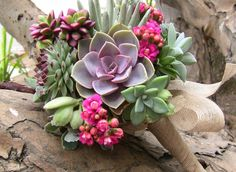 Plantas Suculentas - Arquidicas