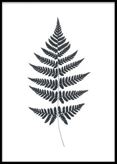 Small black and white print with fern.