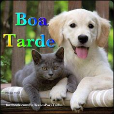 DOK 01 01 © Kimball Stock Golden Retriever Puppy And Chartreux Kitten Laying On Bench Cute Kittens, Cats And Kittens, Kittens Playing, Baby Kittens, Golden Retriever Labrador, Retriever Puppy, Animals Beautiful, Cute Animals, Pretty Animals