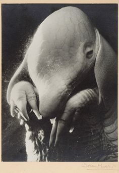 to me this image is the stuff of nightmares..shivers....  50 Unexplainable Black & White Photos