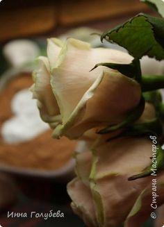 Розы сорт Талея из холодного фарфора. Мастер- класс.