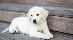 This page shows our current selection of available puppies and upcoming litters.