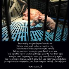Be their friend - don't eat them!  Pigs are the most tortured farm animals on this planet. Stop eating them!