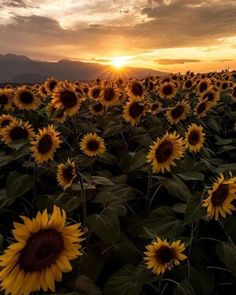 natalca Sunflower Wallpaper, Beautiful Sunrise, Nature Photography, Photography Ideas, Mother Nature, Flower Power, Vintage Photos, Cool Photos, Photo Wall