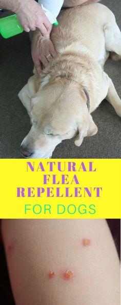 DIY NATURAL FLEA REP