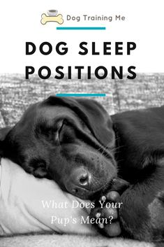 Dog Sleep Positions: What Does Your Pup's Mean? Do you want to know what your dog's sleep position means? Does your dog sleep in a ball, or on their back, or flat out like Superman? Find out what these dog sleep positions mean in our article! Dog Sleeping Positions, Sleeping Puppies, Sleep Positions, Fun Facts About Dogs, Dog Facts, Sleeping On Back, Dog Care Tips, Pet Care, Dog Behavior