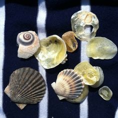 Collecting seashells on Brant Point