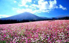 山が動いている様に見えるほどのホタルを見てみませんか?生駒高原の楽しみ方5選   RETRIP[リトリップ]