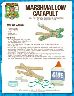 Science for kids - marshmallow catapult experiment Science Party, Preschool Science, Science Experiments Kids, Science For Kids, Science Fun, Summer Science, Science Chemistry, Physical Science, Science Classroom