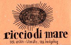 Learning Italian Language ~ riccio di mare