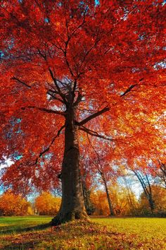 ~~The last sunny day in October ~ blazing autumn colors by fremdartet~~