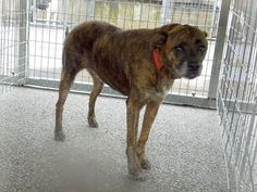 RESCUED!  #SPARKY is an owner surrendered, male mixed breed who weighs approximately 55-65 lbs, is said to be 7 years old, neutered and UTD. He's in need of #rescue or adoption from the #Pocahontas County Animal Shelter in #Marlinton, #WV.  More PHOTOS: https://www.facebook.com/media/set/?set=a.632567970186366.1073741972.257761584333675&type=3&uploaded=2  For more info email: asapwva@gmail.com  #adopt