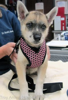 Our second puppy for today is Jasmine.