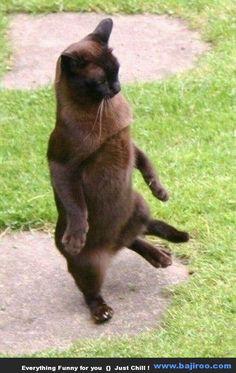 Most Funny Dancing Cats