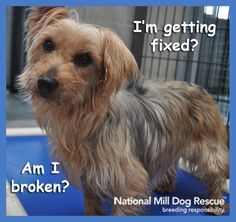 I'm getting fixed? Am I broken?  National Mill Dog Rescue - http://www.milldogrescue.org/