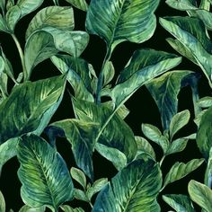 Obraz w Ramie Akwarela Jednolite tło z tropikalnych liści 365 dni na zwrot ✓ Miliony wzorów ✓ 100% Eco-Friendly ✓ Profesjonalna obsługa i doradztwo ✓ Skonfiguruj online!