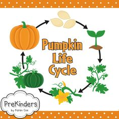 ** Please Note: This Pumpkin Life Cycle Set is included in my BIG pack of Life Cycles. Only purchase this set if you do not want the whole pack of life cycles. Find the big Life Cycles Set here.** This set includes: Fall Preschool, Kindergarten Science, Teaching Science, Science For Kids, Science Activities, Sequencing Activities, Science Area, Preschool Music, Science Resources