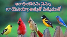 The Real Angry Birds--Selection of colorful birds Pretty Birds, Love Birds, Beautiful Birds, Animals Beautiful, Cute Animals, Beautiful Pictures, House Beautiful, Amazing Photos, Simply Beautiful