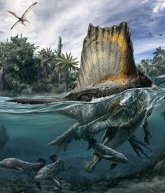 Spinosaurus, believed to possibly be bigger than the T-Rex. Prehistoric Dinosaurs, Prehistoric World, Dinosaur Fossils, Dinosaur Art, Prehistoric Creatures, Prehistoric Wildlife, Illustration Photo, Illustrations, Spinosaurus Aegyptiacus