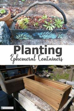 Planting Ephemeral Containers Overwintering, Succulents In Containers, Super Natural, Planting, Bonsai, Nature, Beauty, Website, Plants