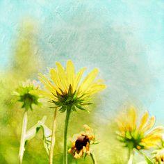 Fine Art Print, Painterly Nature Photo, Dreamy Yellow Sunflower Prairie, 8x8. $30.00, via Etsy.
