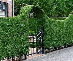 The word topiary is not common among many people. It is simply a way to give proper shape to the hedges and trim them in a perfect manner. This art of giving proper shape to the hedges is quite popular in all over the world. Front Yard Landscaping, Backyard Landscaping, Landscaping Ideas, Country Landscaping, Modern Landscaping, Hydrangea Landscaping, Inexpensive Landscaping, Landscaping Edging, Florida Landscaping