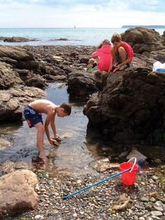 Rock Pooling at Meadfoot Beach, Torquay, Devon. ilovesouthdevon.com |Pinned from PinTo for iPad|