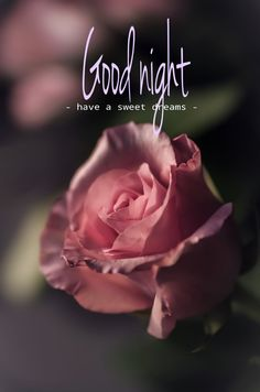 The people who truly matter will never turn their back on you through the hardest times. Forget the people who do. Good Night Angel, Good Night Prayer, Romantic Good Night, Good Night Love Images, Good Night Blessings, Good Night Image, Good Morning Good Night, Evening Greetings, Good Night Greetings