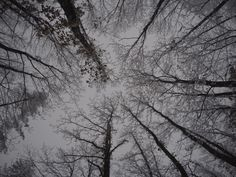 Trees to the Sky