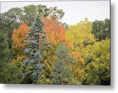 Blue Spruce Autumn Metal Print by Bonfire #Photography