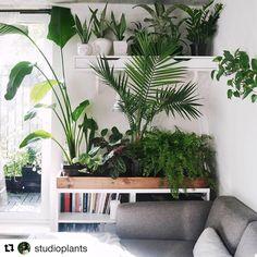 Groene vingers 2.0, via @studioplants Zo'n indoor plantenbak misstaan nergens. Doen, doen, doen! #interior #home #plants #green #design #inspiration