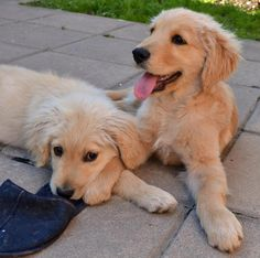 This is Jules & Apollo. Adorable 3 month old pups!