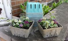 Concrete Dipped Berry Box Planters ~