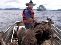 Rodney Dowton ferries kangaroos through floodwaters near Wellington, Australia. Photo by Tracy Woods.