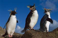 「退化」は進化の一環、新たな力を得た動物たち | ナショナルジオグラフィック日本版サイト