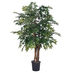 Vickerman TBU064006 Ming Aralia Bush 4 Green *** You can find out more details at the link of the image. (This is an affiliate link and I receive a commission for the sales)