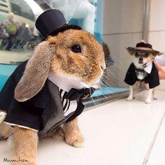 "hattaraisa: "" Have you guys heard of Pui the bunny yet? No? You should. """