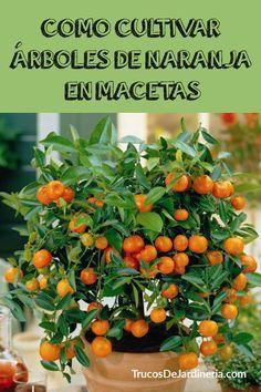 Eco Garden, Vegetable Garden Design, Garden Trellis, Garden Planters, Plants In Jars, Plants Are Friends, Herbs Indoors, Bonsai Plants, Growing Seeds