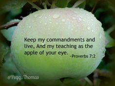 proverbs 7:2 - Google Search