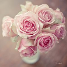 I love all roses, but pink roses are my favorites, followed by all the others!  :)