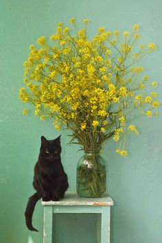 A kitty, turquoise, a worn table, a big glass jug, and yellow flowers: pretty much it.