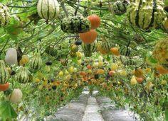 wow, hanging pumpkin garden