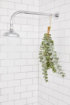 Life Hack: Put a Bunch of Eucalyptus In Your Shower Bathroom Plants, Bathroom Colors, Small Bathroom, Eucalyptus Shower, L Eucalyptus, Hanging Plants, Indoor Plants, Shower Plant, Br House