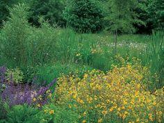 Bog Garden Ideal for Moisture Loving Plants