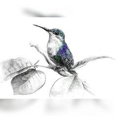by.chanmi_la 2014년 벌새 영어로는 Hummingbird 작은 몸통으로 재빠르게 돌아다니는 녀석으로 겉모습은 꽤나 화려하고 비늘같은 깃과 기다란 부리가 특징 -pen drawing . #drawing#draw#penstagram#pendrawing#sketching#스케치#hummingbird#artwork#arts_help#arts_spotlight#arts_gallery#일러스트#소묘#벌새#펜화#드로잉#동물#art_therapy#artistscentral#artistic_share#drawanyway#draweveryday#loveart#artgram#아트그램#awesome_art_studio#penfreaks#penkingdom