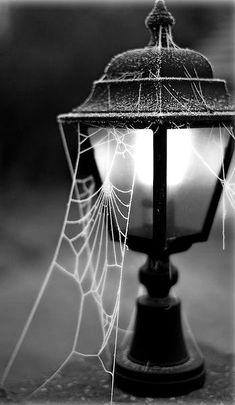 Мотыльки всегда летят на свет. А умные пауки, зная это, плетут свои сети вокруг фонарей. Вывод прост: на пути к любой цели, не стоит забывать об осторожности.   #ОльгаБерек #вдохновение #мысли