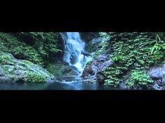 "Calypso // ""Lotus"" [OFFICIAL VIDEO]"